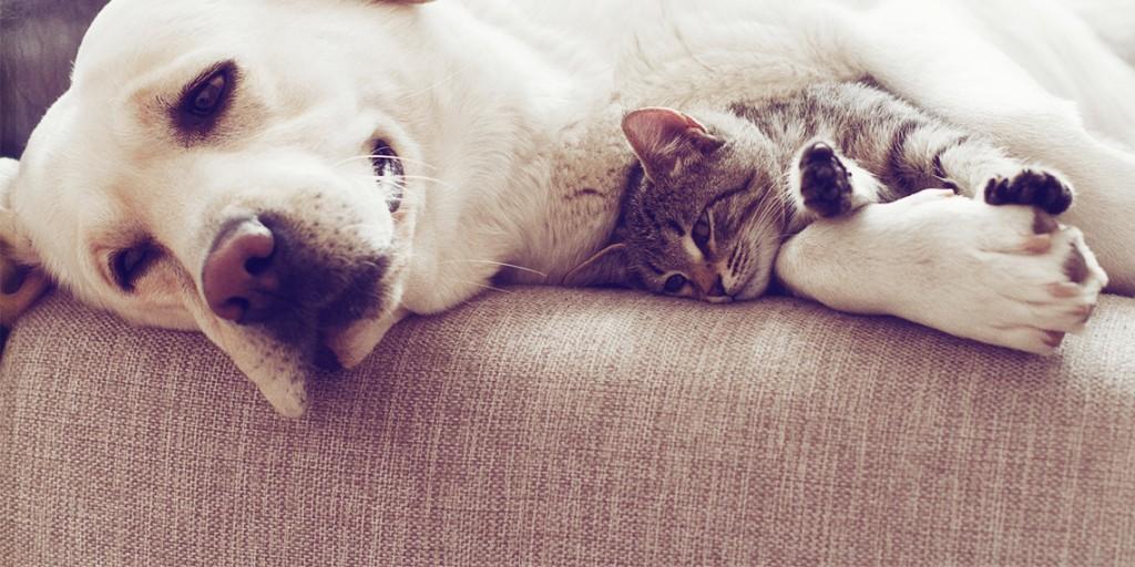 Como eliminar os pêlos dos animais sobre os móveis e os tapetes?